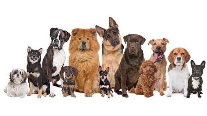 Классификация пород собак - Sobaky.Info