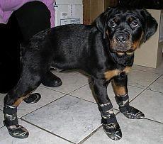 Как сшить обувь для собак своими руками ...