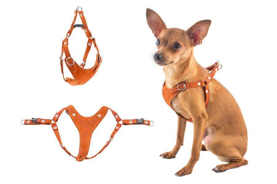 Шлейка для собак: виды, предназначение ...