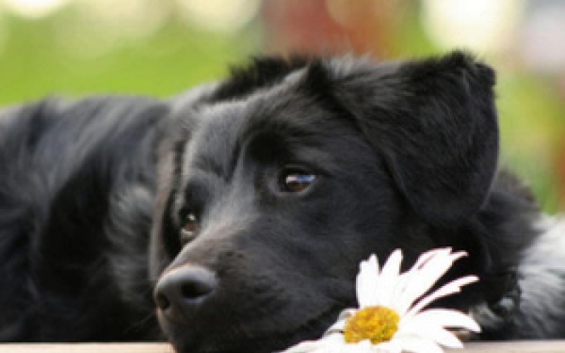 Скучают ли собаки в одиночестве?