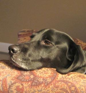 Анорексия (отсутствие аппетита) у собак
