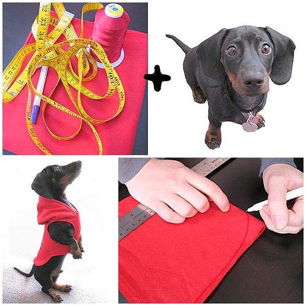 Для кошек и собак | Одежда для собак ...