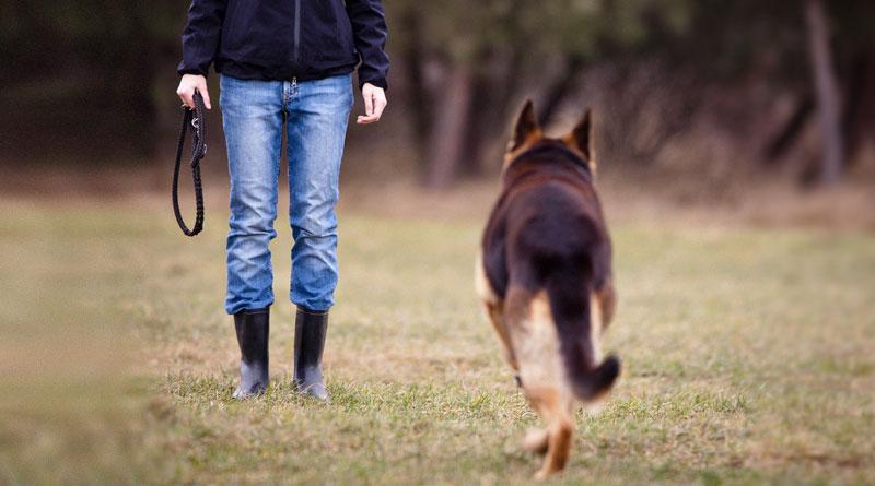 Как научить собаку команде Ко мне ...