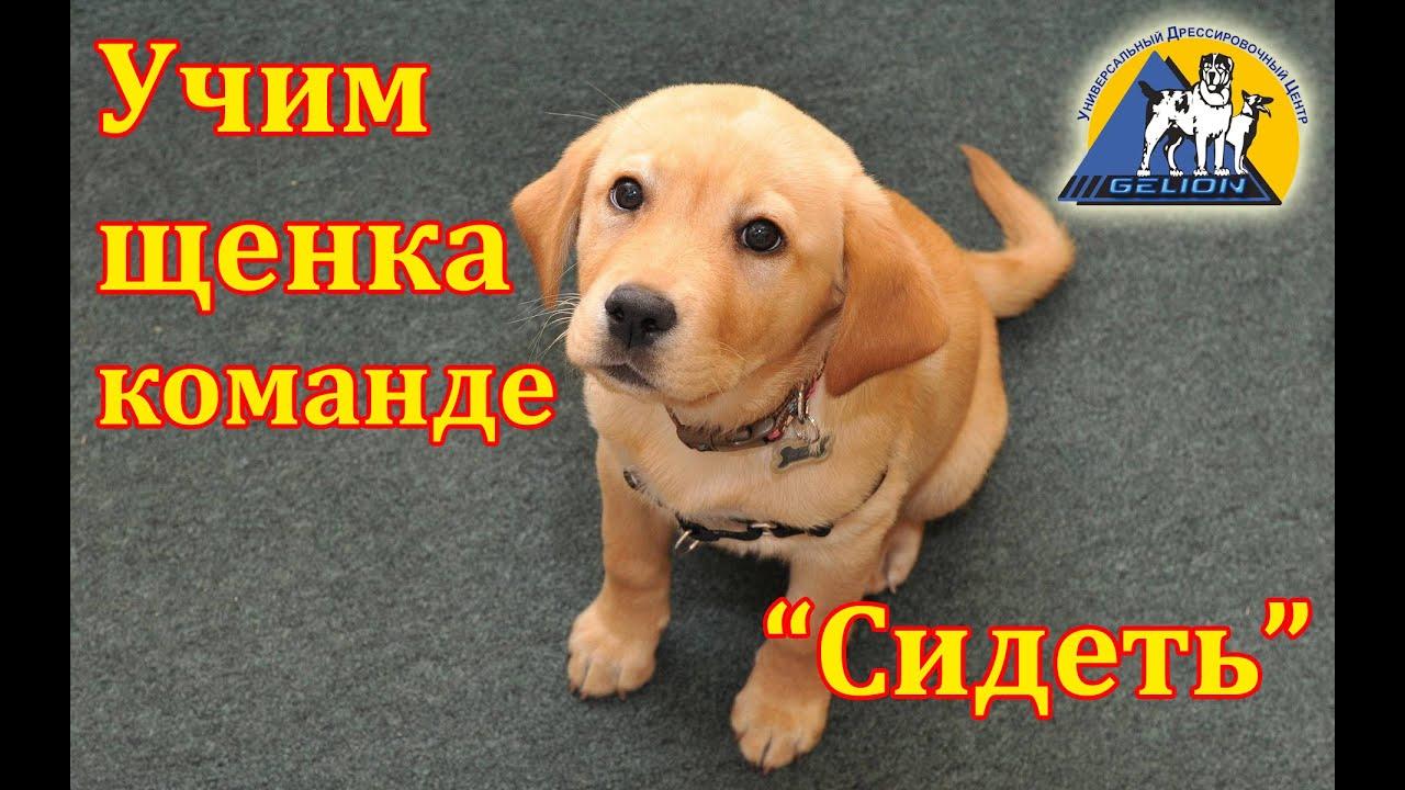Урок №2. Как научить собаку команде ...