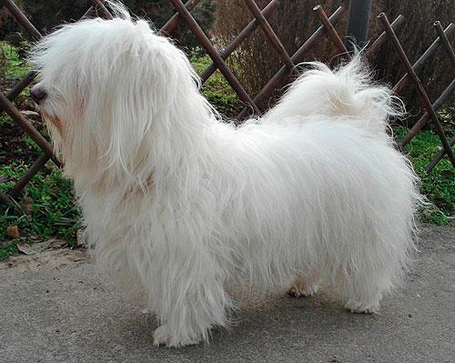 Одис - Одесская домашняя идеальная собака