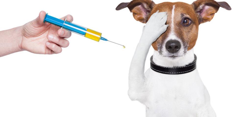 Вакцинация и прививки собак. Схема ...
